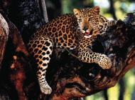 Prijeli tihotapce s prepovedanimi živalskimi kožami