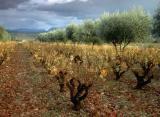 Olivno olje so pridelovali že v starem veku
