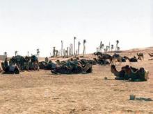 Mednarodni Festival Sahare