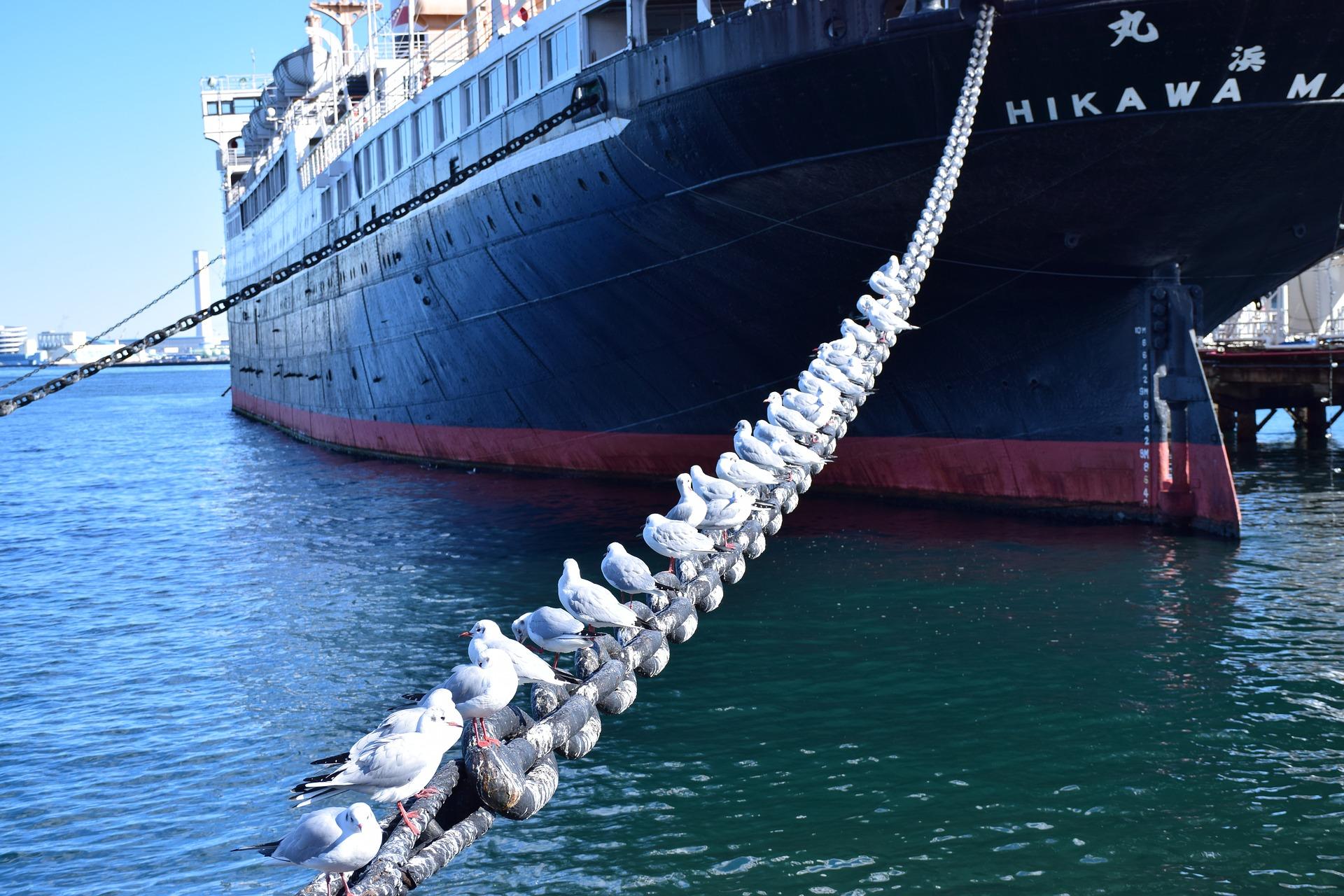 Bogastvo ruskega daljnegavzhoda: morska hrana