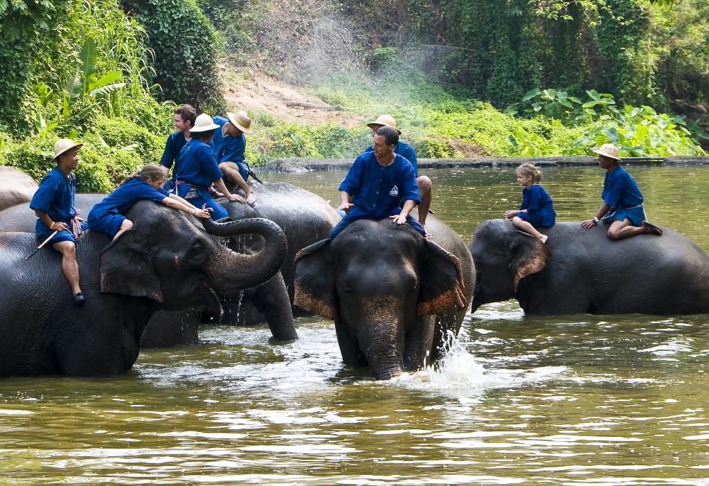 Tajska je bila in ostaja dežela slonov