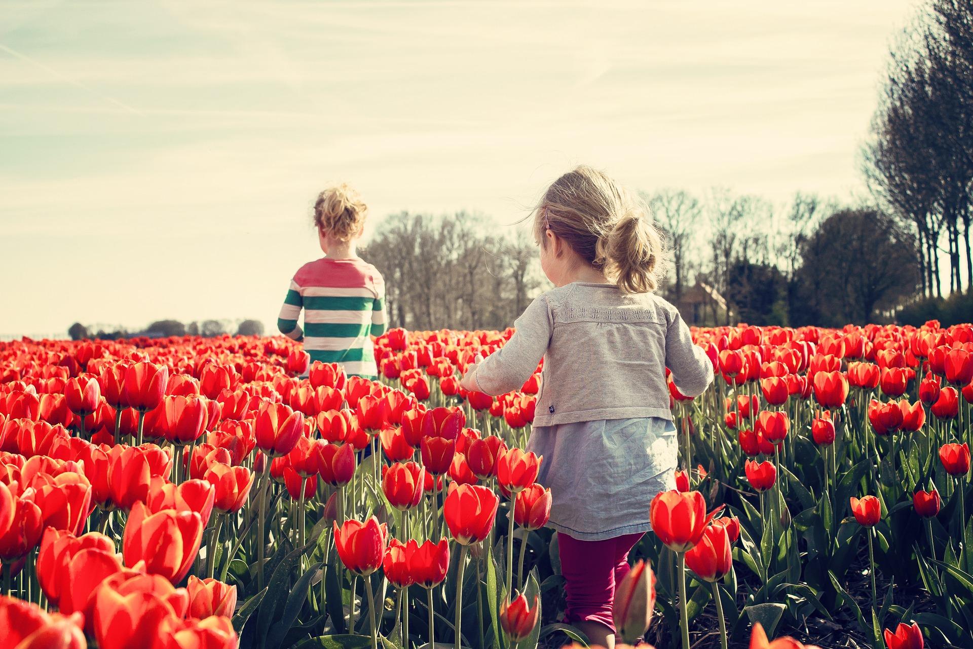 Nizozemska, kraljica tulipanov