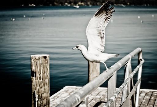 sea-flight-bird-flying-medium
