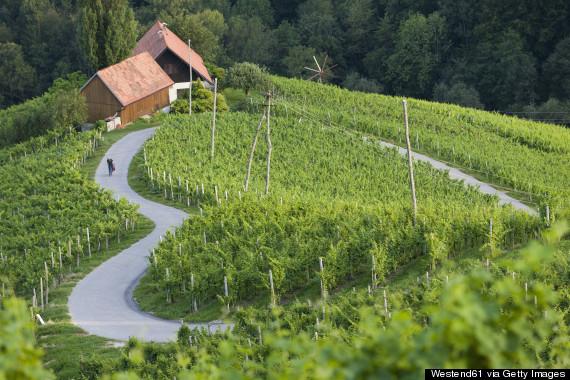 Slovenia, Spicnik, Mature man cycling through vineyard