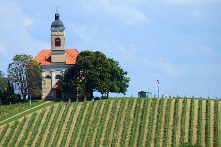 Kapela-vineyards_cs