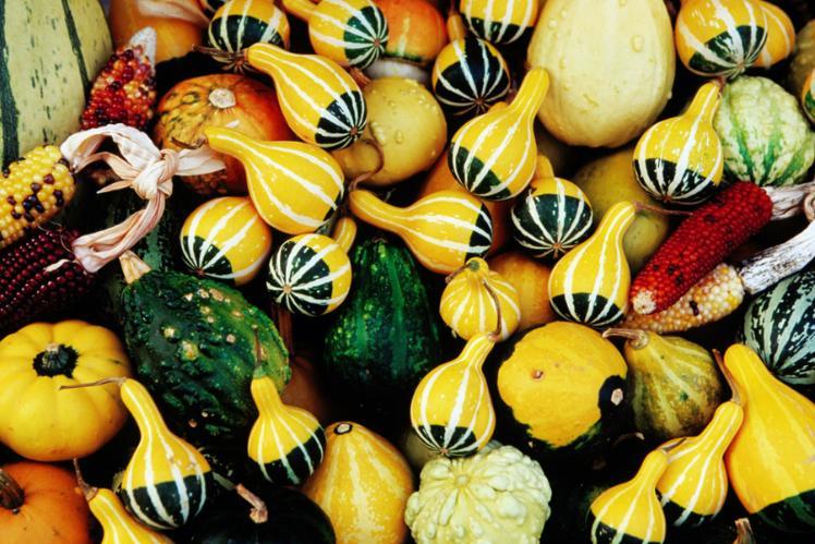 pumpkins_cs