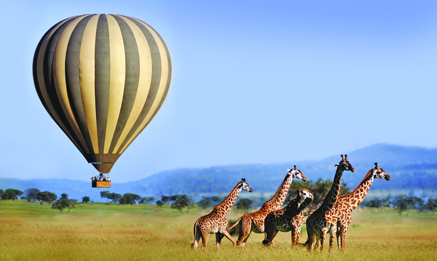 Soaring-above-giraffes