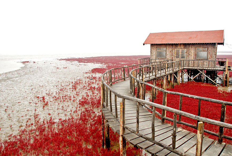 panjin-red-beach-china-10