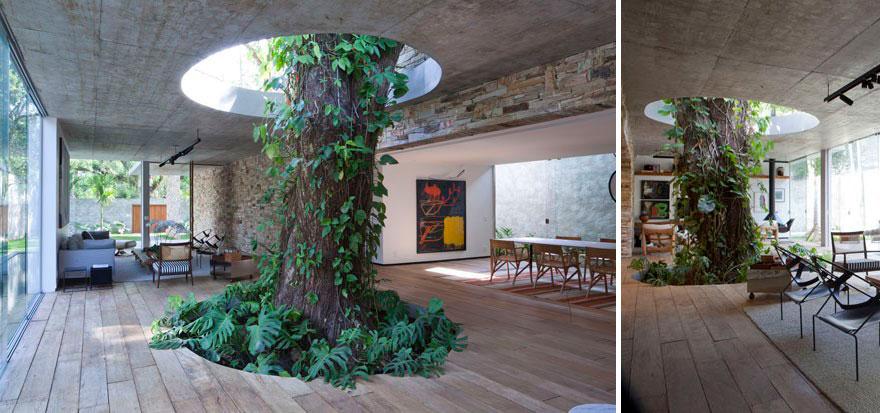 tree-inside-2